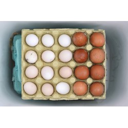 Eggs - Digigraphie