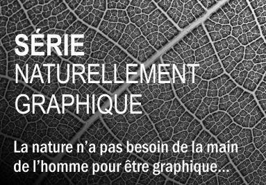 Série Naturellement Graphique - Frédéric COIGNOT